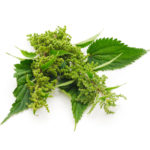 nettle-leaf-extract